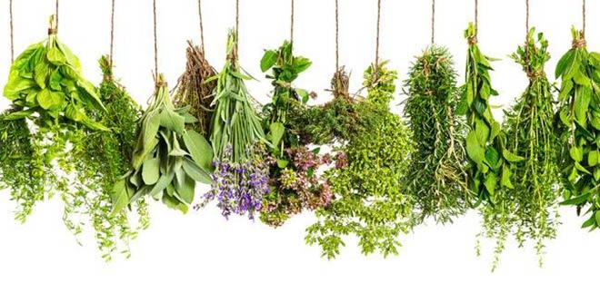 Большинство народных рецептов основано на травах